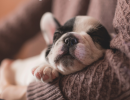 Dog Sleeping - Losing Sleep Can Hurt