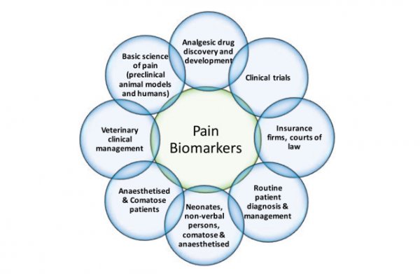 Pain biomarkers diagram -- basic science of pain (preclinical animal models and humans); analgesic drug discovery and development; clinical trials; insurance firms, courts of law; routine patient diagnosis & management; neonates, non-verbal persons, comatose & anaesthetised; anaesthetised & comatose patients; veterinary clinical management